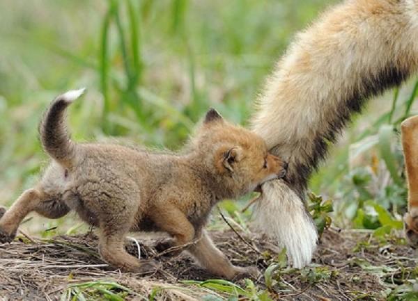 Baby animals22 Baby Animals (27 pics)