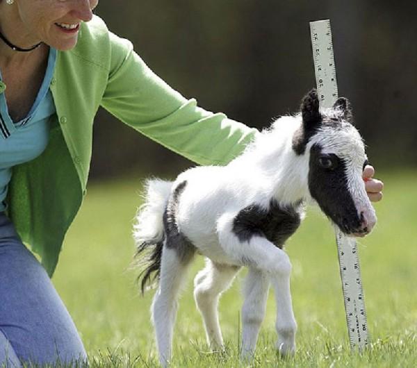 Baby animals23 Baby Animals (27 pics)