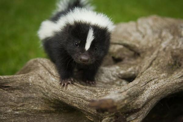Baby animals24 Baby Animals (27 pics)