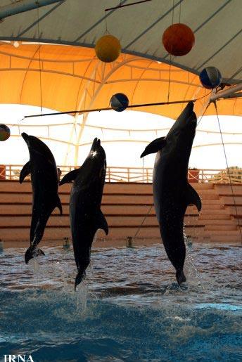 نمايي از پارک دلفين ها در کيش