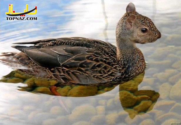 funny-photoshopped-animals-pics-10-615x425