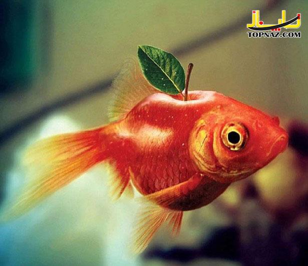funny-photoshopped-animals-pics-12-615x532