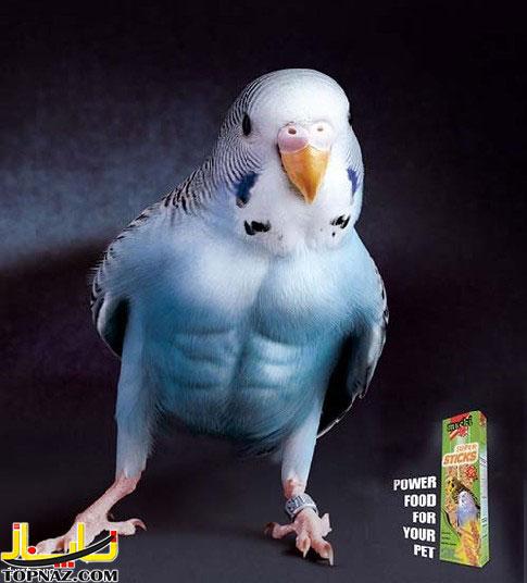 funny-photoshopped-animals-pics-15