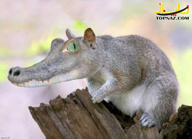 funny-photoshopped-animals-pics-16-615x446