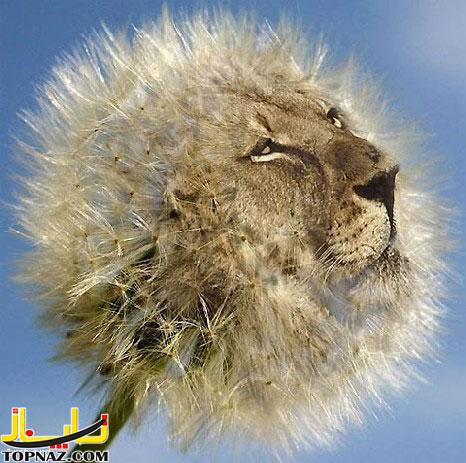 funny-photoshopped-animals-pics-17