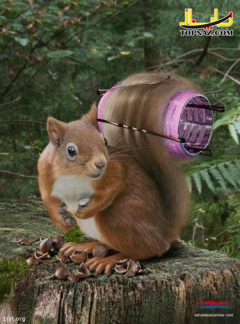funny-photoshopped-animals-pics-18