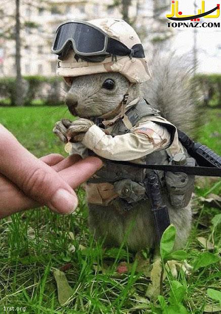 funny-photoshopped-animals-pics-19