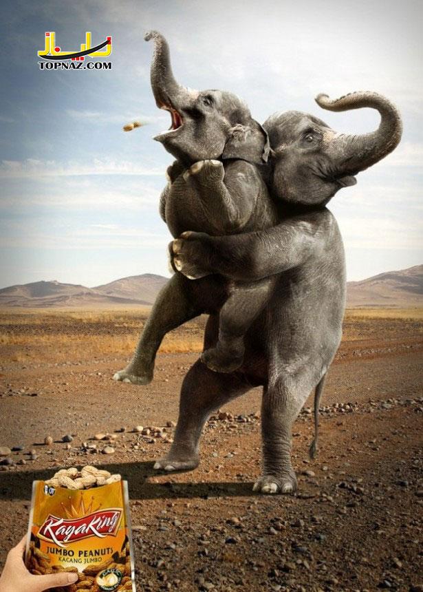 funny-photoshopped-animals-pics-22-615x860