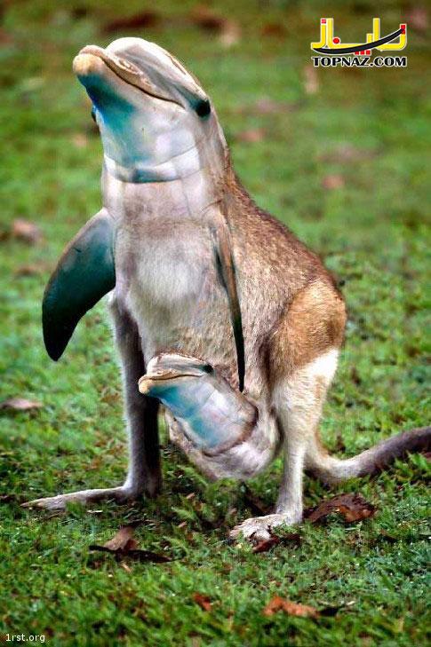 funny-photoshopped-animals-pics-24