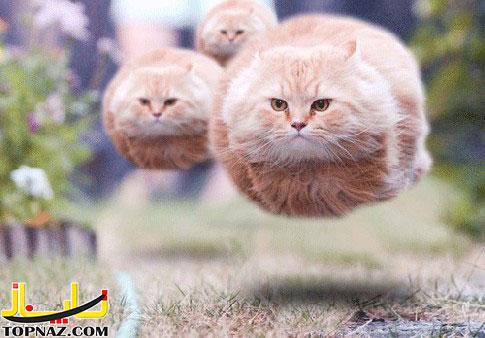 funny-photoshopped-animals-pics-4