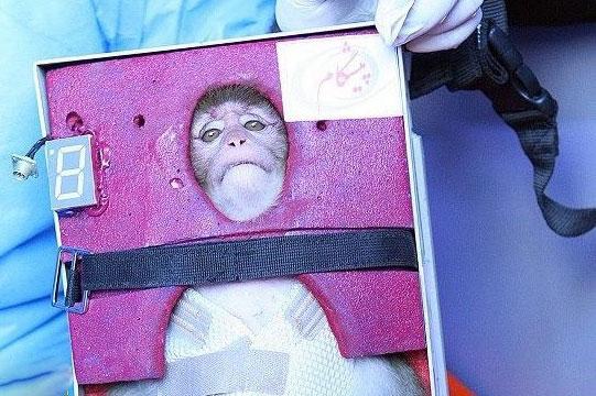 میمون فضانورد