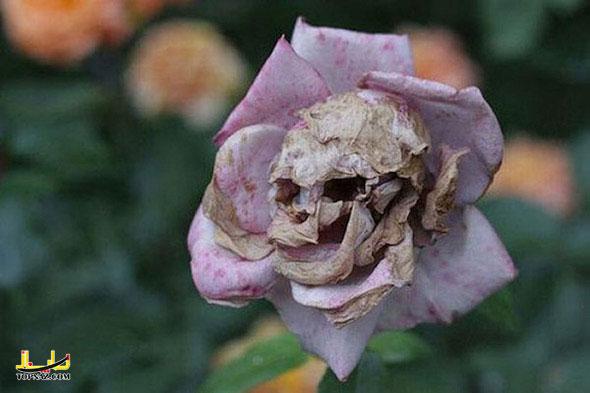 گل وحشتناک