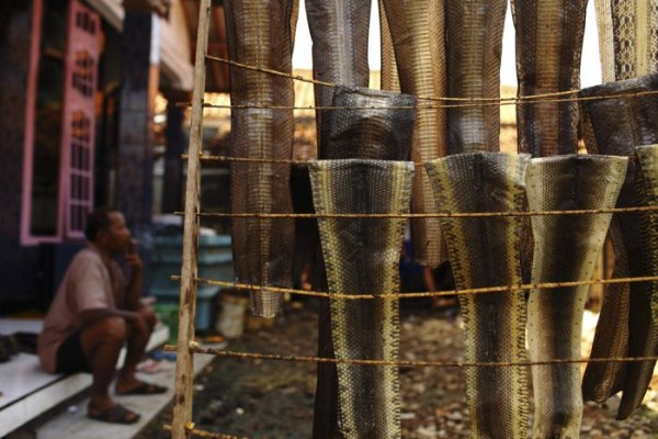 1134 Production of Snakeskin Handbags (22 photos)