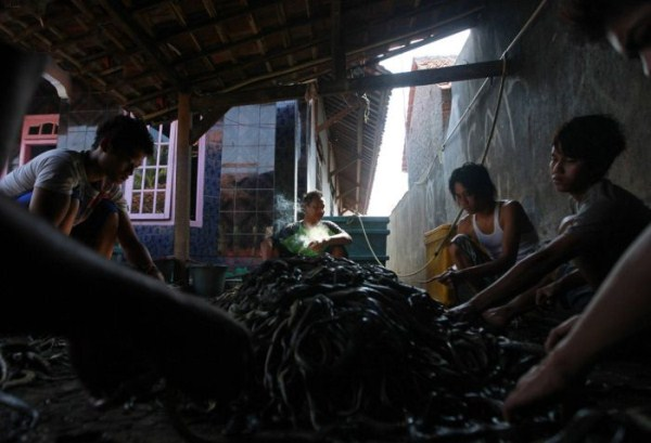 1227 Production of Snakeskin Handbags (22 photos)