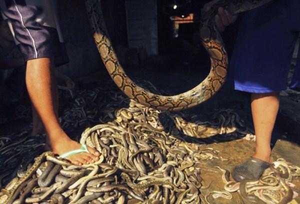 1816 Production of Snakeskin Handbags (22 photos)