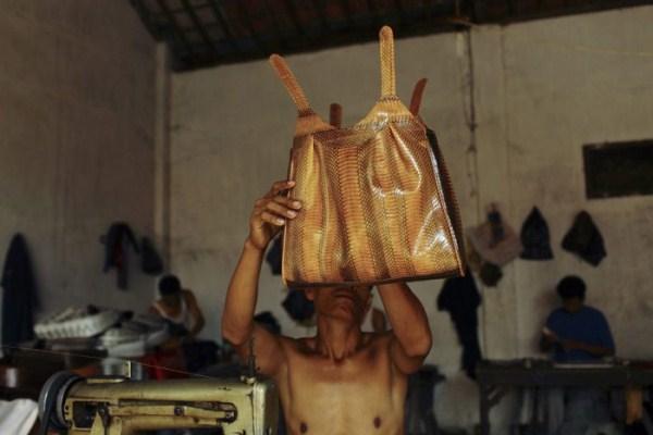 2216 Production of Snakeskin Handbags (22 photos)
