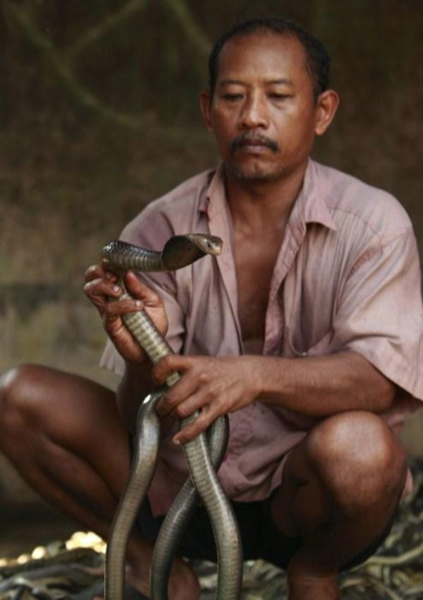 445 Production of Snakeskin Handbags (22 photos)
