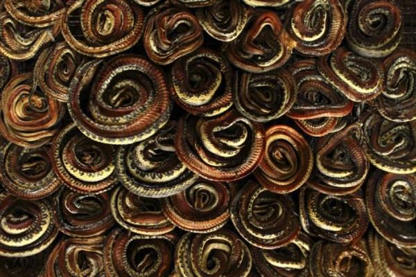 533 Production of Snakeskin Handbags (22 photos)