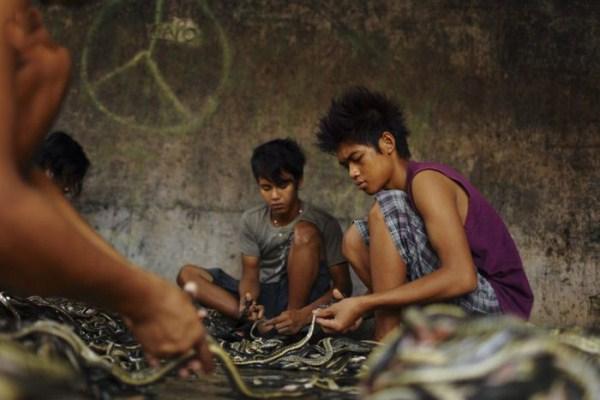 731 Production of Snakeskin Handbags (22 photos)