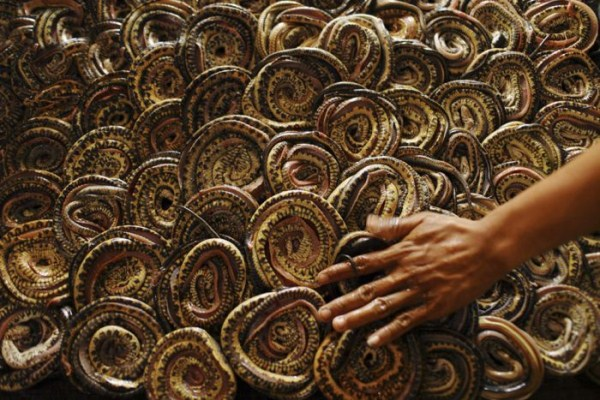 930 Production of Snakeskin Handbags (22 photos)