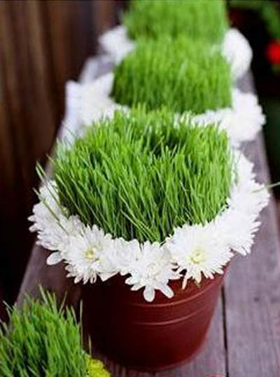سبزه نوروز با ایده جدید