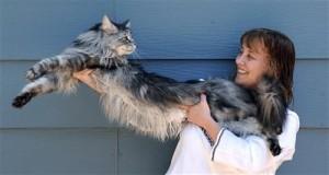 بلندترین گربه جهان