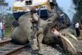صحنه غم انگیز تصادف فیل با قطار