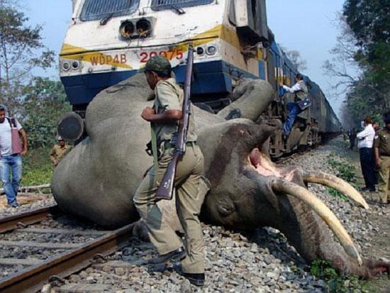 تصادف فیل با قطار