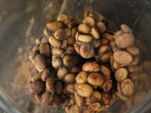 قهوه مدفوع گربه : پس از خورلندن قهوه به گربه مدفوعش را تصفیه می کنند!