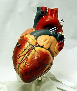 مشکل قلب