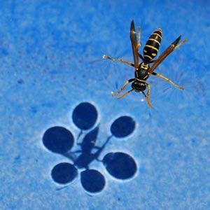 راه رفتن حشرات روی اب