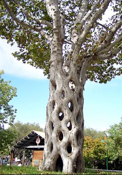 درختان جالب