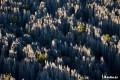 جنگل سنگی یکی از شگفت انگیزترین مکانهای جهان +تصاویر