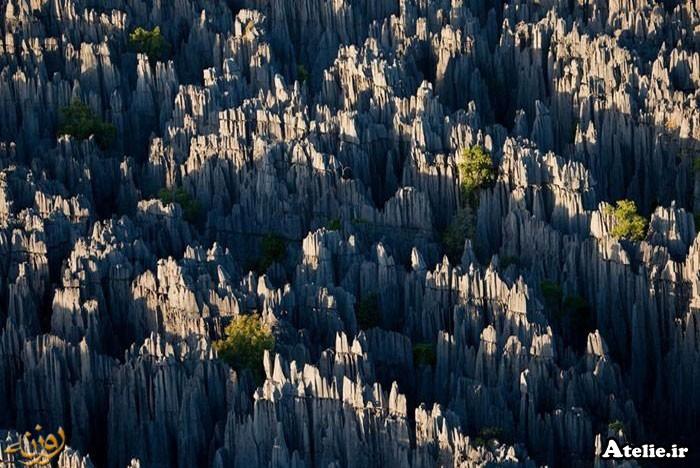جنگل سنگی