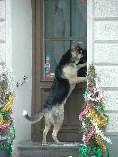 سگ باهوش