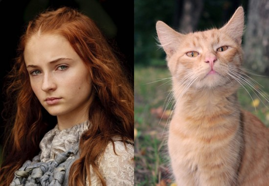 Game-Of-Thrones-Characters-as-Cats-10-550x380