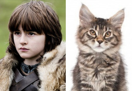 Game-Of-Thrones-Characters-as-Cats-11-550x380