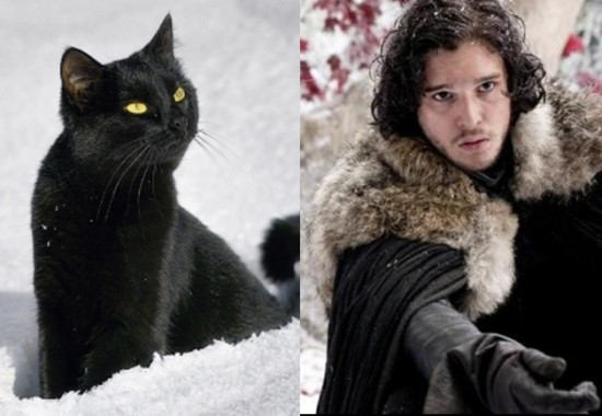 Game-Of-Thrones-Characters-as-Cats-12-550x380