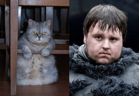 Game-Of-Thrones-Characters-as-Cats-13-550x380