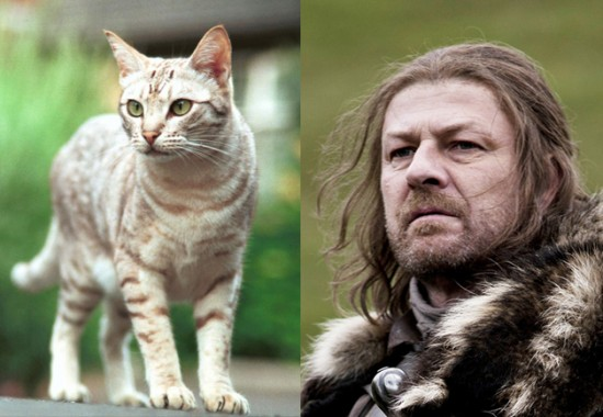 Game-Of-Thrones-Characters-as-Cats-8-550x380