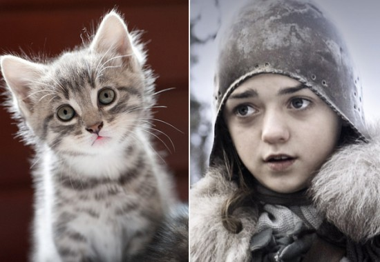 Game-Of-Thrones-Characters-as-Cats-9-550x380