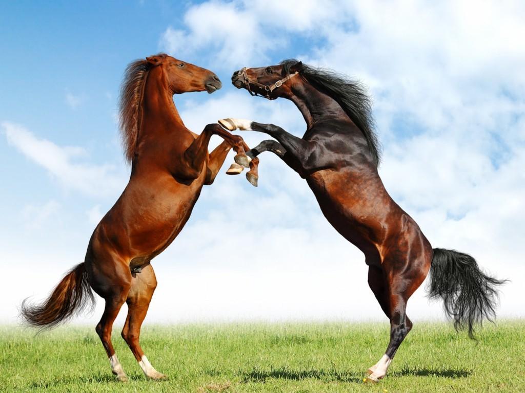 عکس اسب