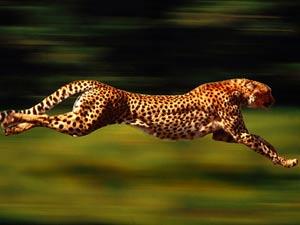 حیوانات سریع
