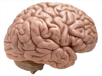 مورد عجیب و خواندنی در مورد انسان, مغز انسان, دانستنی جالب در مورد انسان