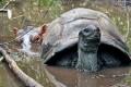 عکسهای جالب از دوستی عجیب حیوانات
