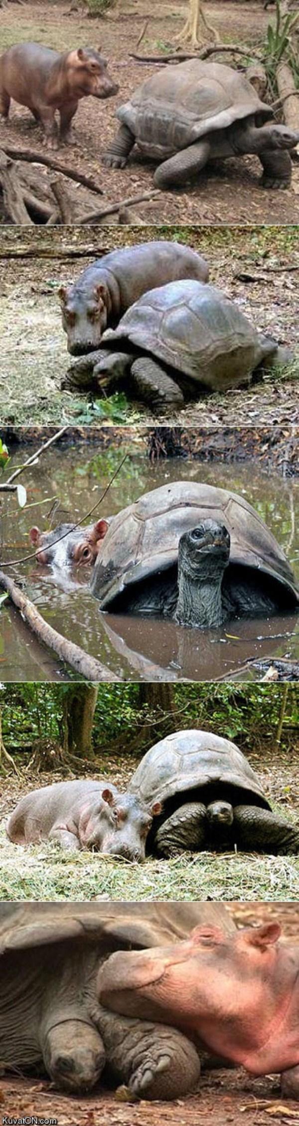 عکس دوستی حیوانات
