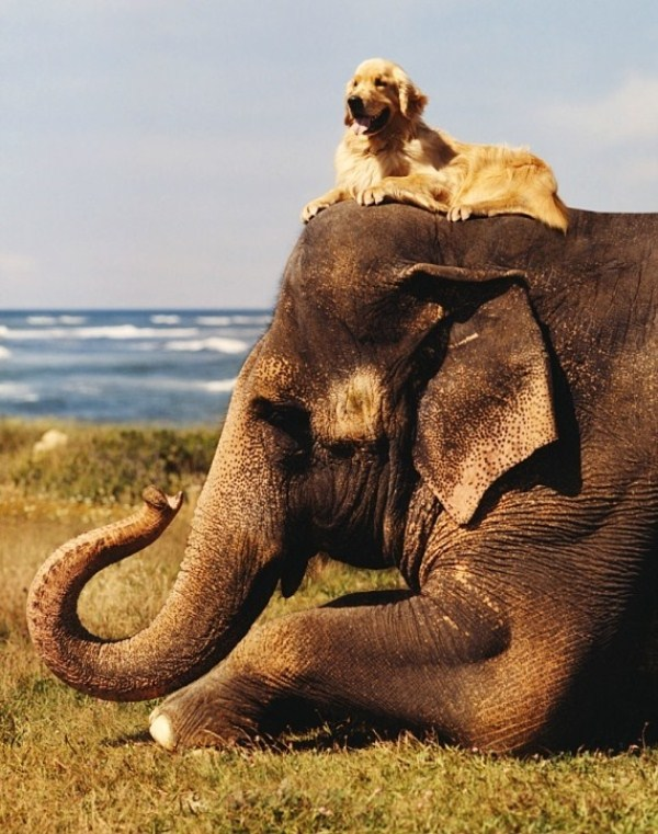 124 Unlikely Animal Friendships (30 photos)