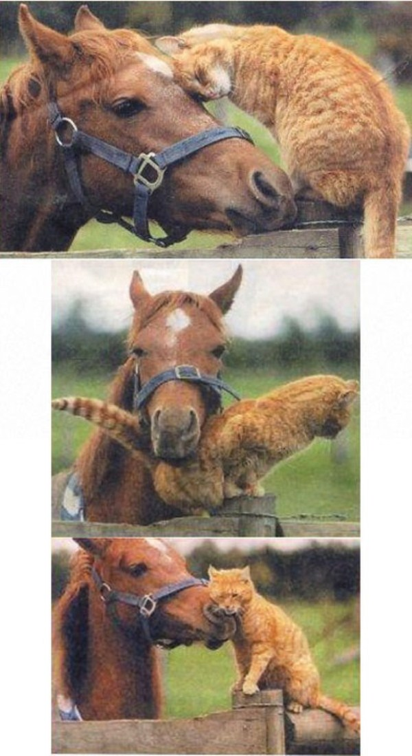 153 Unlikely Animal Friendships (30 photos)