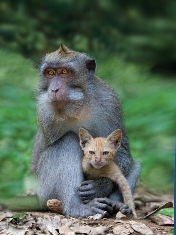 183 Unlikely Animal Friendships (30 photos)