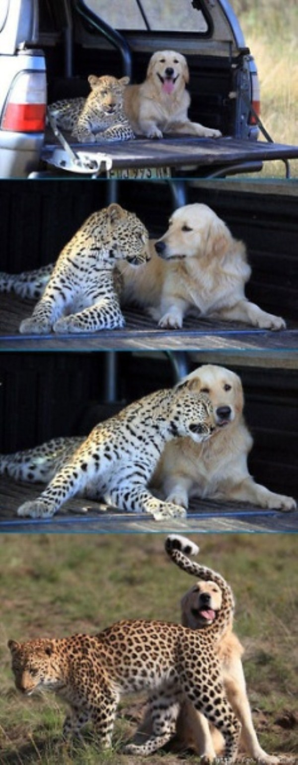 203 Unlikely Animal Friendships (30 photos)